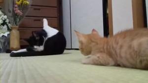 かわいらしい猫ぱんち - YouTube.flv_000000033