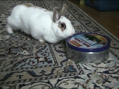 Cute-rabbit-steals-cookies-