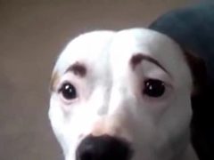 _-Funny-Dogs-with-Eyebrows-