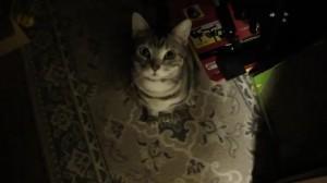 - まばたきが可愛い猫 - Cat that a blink is cute. - YouTube.mp4_000055055