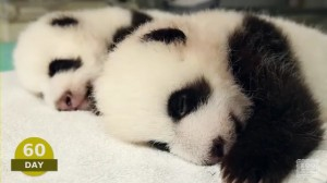 The first 100 Days of Mei Lun and Mei Huan - YouTube.mp4_000109275