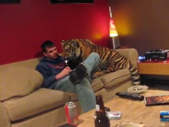 Jonas-the-tiger-at-home-wit