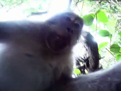 Monkey-Steals-GoPro-Hero-3-