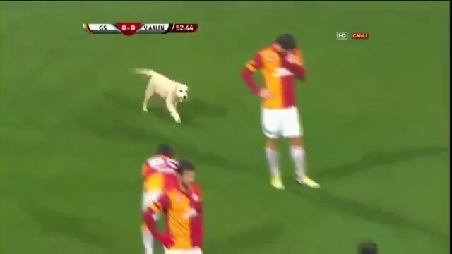 Puppies Interrupt Turkish Soccer Match Between Galatasaray and Aalen.mp4_000037160