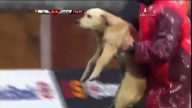Puppies Interrupt Turkish Soccer Match Between Galatasaray and Aalen.mp4_000050200