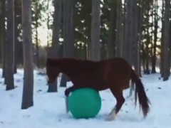 Horses-Playing-With-Balls-C