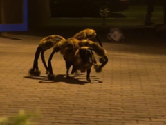 Mutant-Giant-Spider-Dog-(SA