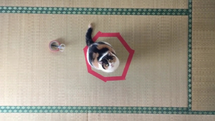 CAT IN CIRCLE _ 猫転送装置 _ 猫ホイホイ - guremike.mp4_000044911