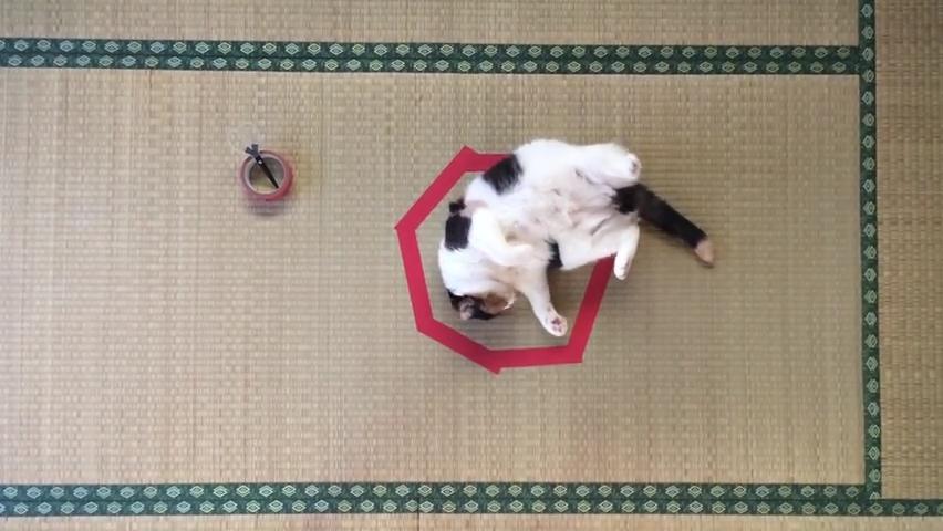 CAT IN CIRCLE _ 猫転送装置 _ 猫ホイホイ - guremike.mp4_000093660