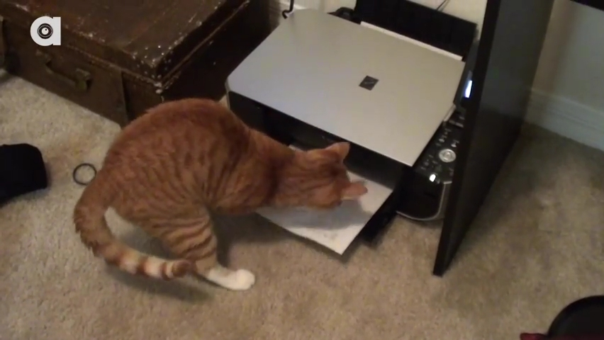 What it's like to Work with Cats!.mp4_000151951