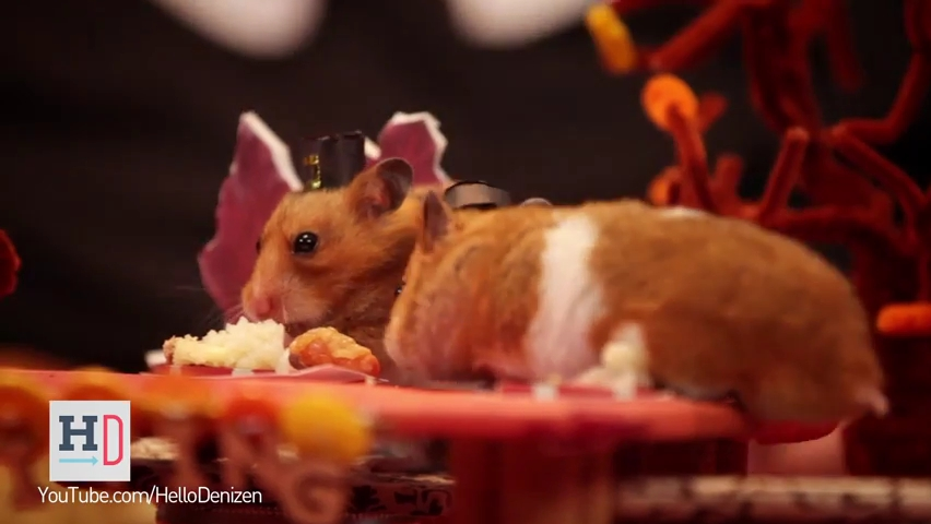 A Tiny Hamster Thanksgiving (Ep. 4).mp4_000064522