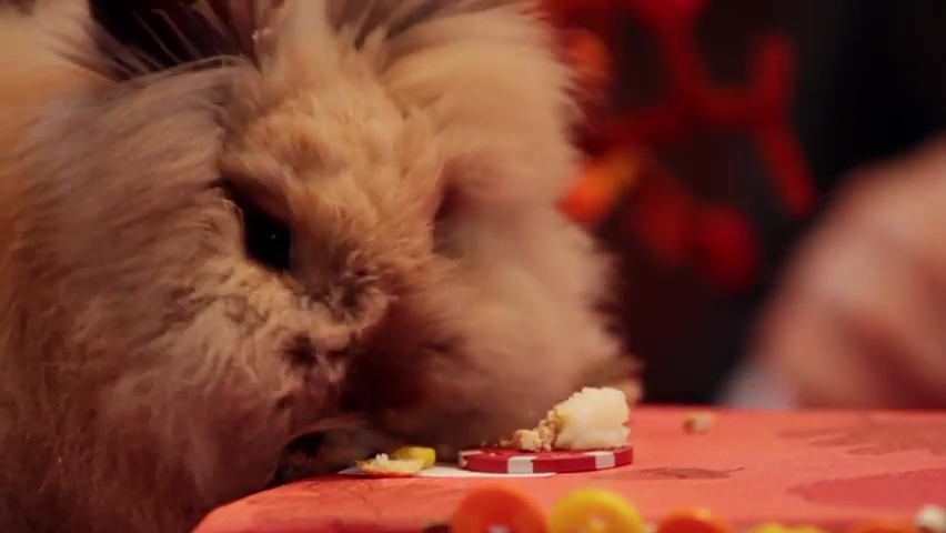 A Tiny Hamster Thanksgiving (Ep. 4).mp4_000079871