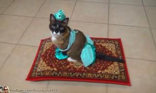 Cat Riding Magic Flying Carpet. #HappyHalloween  I TexasGirly1979.mp4_000006106
