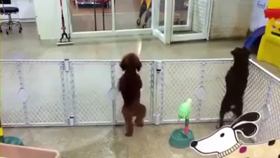 Excited puppy spots its owner.mp4_000007033