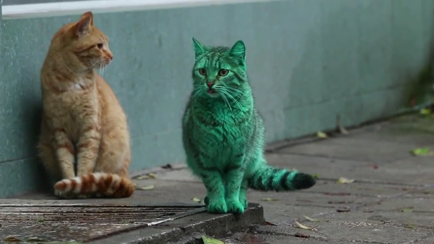 Feline a little green! Meet the GREEN cat of Bulgaria.mp4_000041040