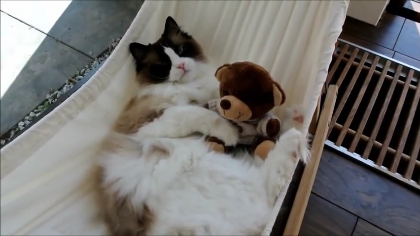 Timo the Cat and his hammock (part 3) check out his progress.mp4_000041274