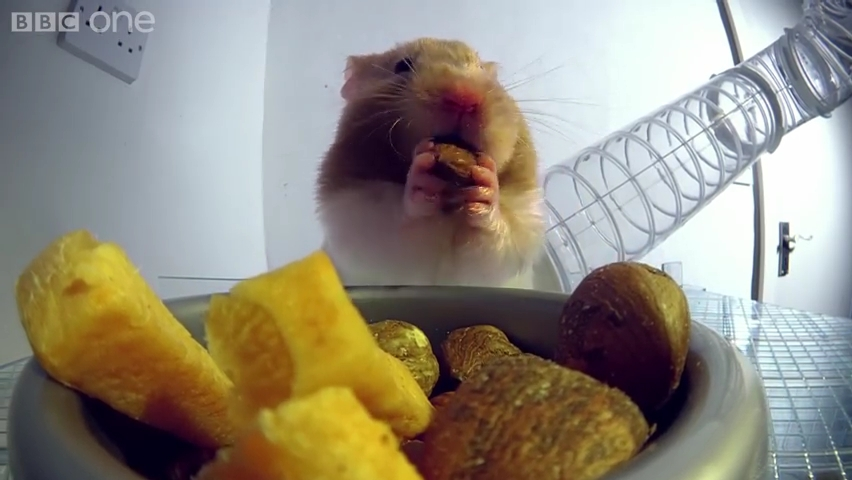 Inside a hamster's cheeks - Pets - Wild at Heart_ Episode 1 Preview - BBC One.mp4_000007920