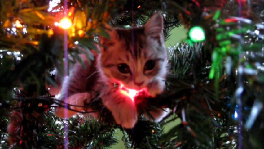 cattree-1