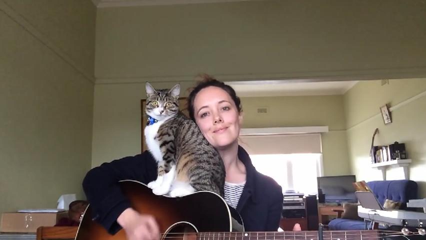 songwritercat-1