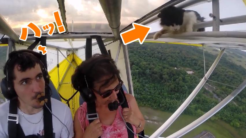 flyingcat-1