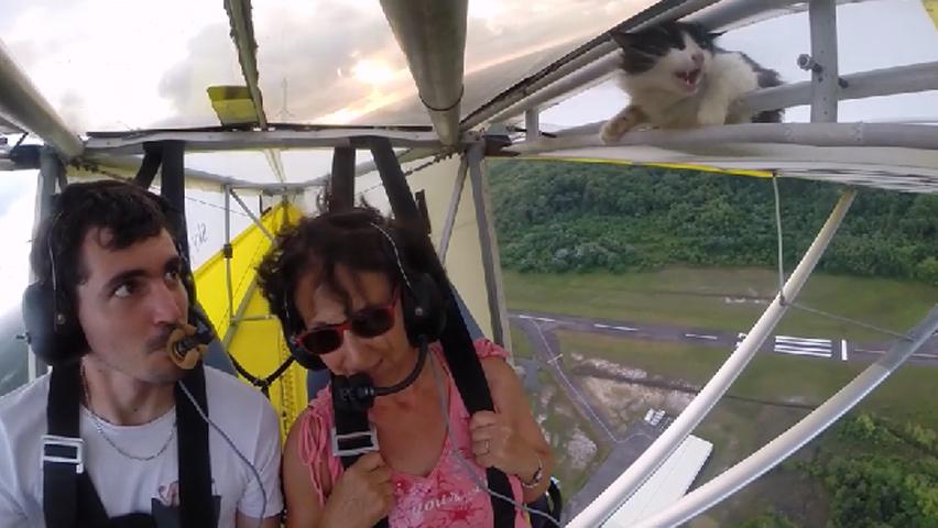 flyingcat-2