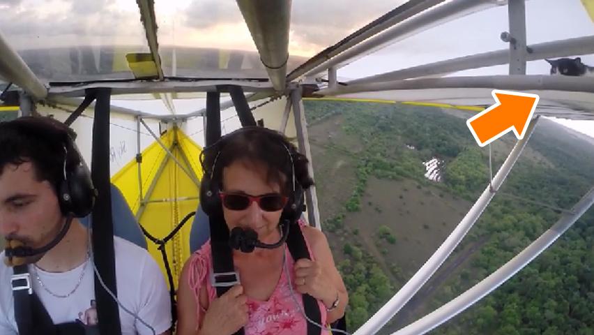 flyingcat-3