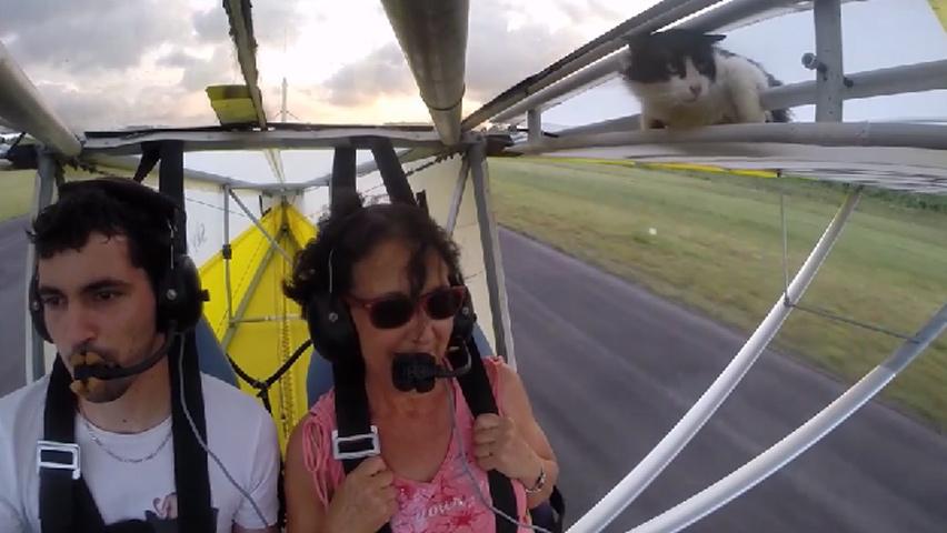 flyingcat-5